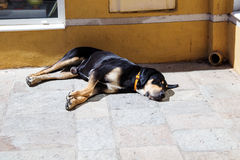 Dog. The dog is lying on the street near the shop, basking in the sun, in the city, day, summer, photo taken near the shop Royalty Free Stock Image