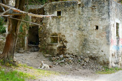 A dog lying by a very old house Stock Photos