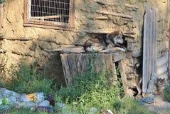 Dog lying on wooden box Stock Image