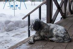 Dog lying on a wooden veranda stock photo