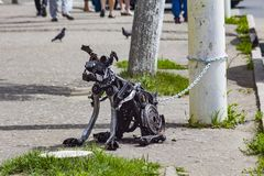 The dog is made of a metal garbage royalty free stock photos
