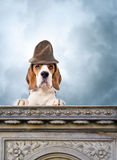Dog in a magic hat Stock Images