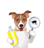 Dog with a magnifying glass, flea and spray Royalty Free Stock Photo