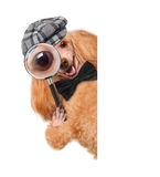 Dog with magnifying glass and searching. The white banners stock photos