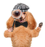 Dog with magnifying glass and searching. Isolated on white royalty free stock photos