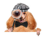 Dog with magnifying glass and searching Stock Photography
