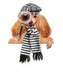 Dog with magnifying glass and searching. The white banners royalty free stock photos