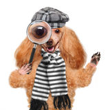 Dog with magnifying glass and searching Stock Images