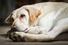 Dog make a sad face Stock Photo