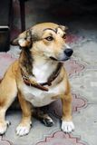 Dog with make-up. Stock Images
