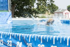 Dog jumping in to a pool. Dog makes a big splash at pool challenge royalty free stock images