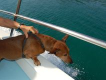 Dog makes a Boat Trip Royalty Free Stock Image