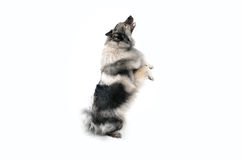 Dog makes male Royalty Free Stock Image
