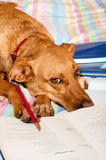Dog is making homework Royalty Free Stock Images