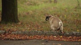Dog Making A Poop