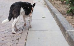 Dog mammal animal. Domestic dog aka Canis lupus familiaris mammal animal Royalty Free Stock Photo