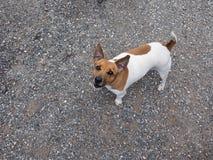 Dog mammal animal Stock Images