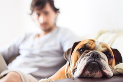 Dog and Man. A man with his dog on a sofa Stock Photo
