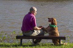 Dog and man friends Stock Photos