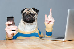 Dog with man hands using mobile phone and pointing up. Cute pug dog with man hands in striped sweater using mobile phone and pointing up over grey background royalty free stock photos