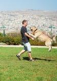Dog and man play together Stock Photos