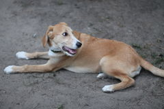 A dog - man`s best friend Stock Photo