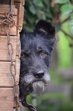 The dog - man's best friend. Stock Photo