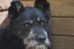 The dog - man's best friend Stock Photos