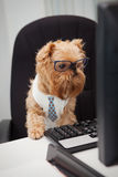 Dog Manager Stock Photo