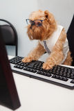 Dog Manager Royalty Free Stock Image