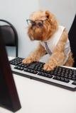 Dog Manager Royalty Free Stock Image