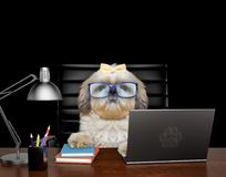 Dog manager in glasses is doing some work on the computer.  on black. Background Royalty Free Stock Image
