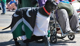Dog marching in parade. Royalty Free Stock Images