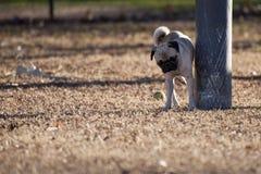 Dog marking a pole Stock Photo