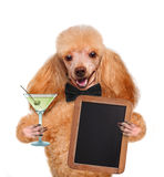 Dog with a martini Stock Photos