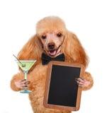 Dog with a martini stock photos