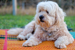 Dog on the mat. Stock Photos
