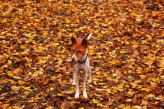 Dog matching background royalty free stock photo
