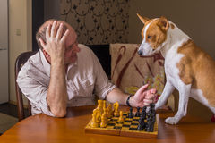 Dog and mature man discussing capitulation conditions in a chess family tournament Stock Image