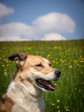 Dog 277 in meadow Stock Photo