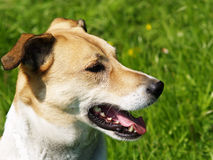 Dog in the meadow (5) Stock Photos