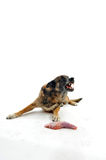 Dog and meat Royalty Free Stock Photography