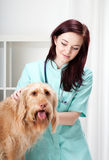 Dog during medical appointment royalty free stock images