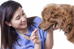 Dog Medical Treatment Stock Photography