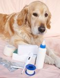 Dog medicine. Dog with various drugs for their health stock images