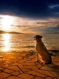 Dog 276. Dog at the mediterranean sea, sunset 276 Stock Photography