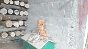 Dog Medo. Happy Amazing Stock Photos