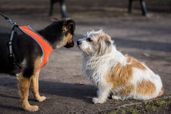Dog meeting in the park Stock Image