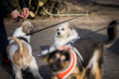 Dog meeting in the park Royalty Free Stock Photo
