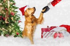 Dog Meeting Santa Claus at Christmas stock image